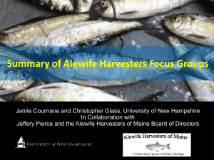 Summary of Alewife Harvesters Focus Groups