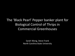 The Black Pearl Pepper Banker Plant for Biological Control of Thrips