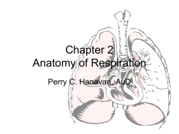 Chapter 3 Anatomy of Respiration