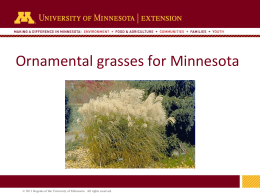 Ornamental Grasses Presentation