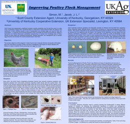 Improving Poultry Flock Management