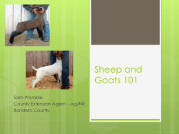 Sheep and Goats 101