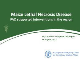 Maize Lethal Necrosis Disease FAO supported