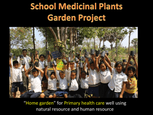 School Medicinal plants garden project