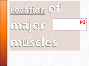 Location of major muscles
