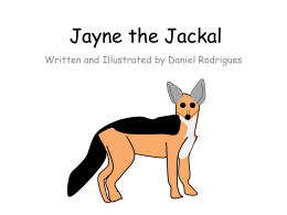 Jayne the Jackal - rodrigues.id.au
