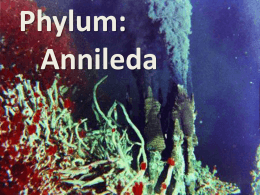 B11Annelida - Science at NESS