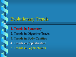 Evolutionary Trends and Some Animal Phyla