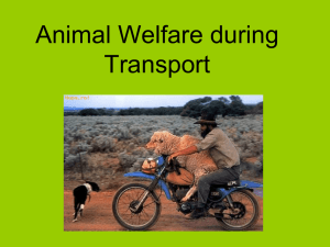Animal Welfare during Transport
