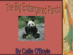 The Big Endangered Panda Bear