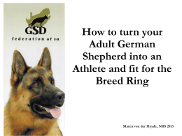 How to turn your adult German Shepherd into an