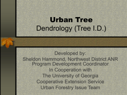 Urban Tree Dendrology (Tree I.D.)