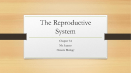 Chapter 34 Reproductive System