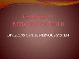 CHAPTER 11 NERVOUS SYSTEM II