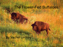 flower fed buffaloes by vachel lindsay essay The flower-fed buffaloes by vachel lindsay the flowerfed buffaloes of the spring in the days of long ago ranged where the locomotives sing and the prairie flowers.