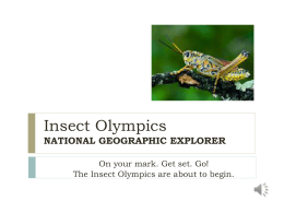 Insect Olympics