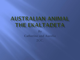 Australian Animal the Ekaltadeta