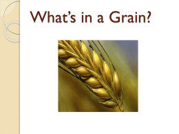 Types of Grains power point