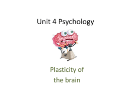 Plasticity of the brain
