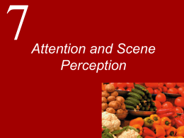 Attention and Scene Perception