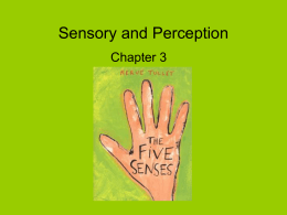 Sensory and Perception