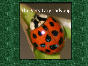 The Very Lazy Ladybug - Carden Arbor View School