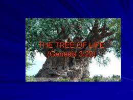 THE TREE OF LIFE (Genesis 3:22)