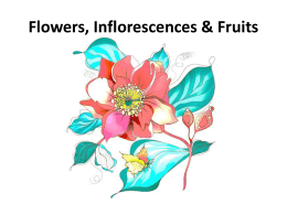 Flowers Inflorescences and Fruits