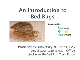 An Introduction to Bed Bugs
