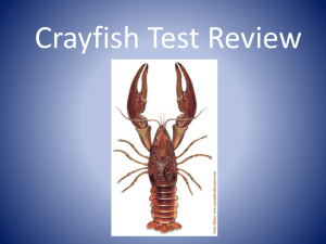 A crayfish*s hard, shell-like covering is called a ______.