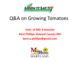 How to Grow Great Tomatoes - University of Maryland Extension