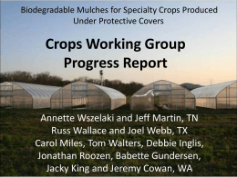 Crops WG Progress Report ppt