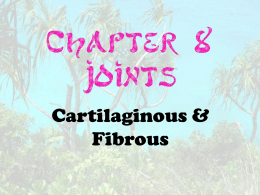 Joints - Cartilaginous & Fibrous