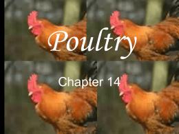 Poultry ppt.