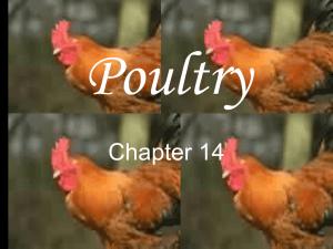 Poultry Unit PPT