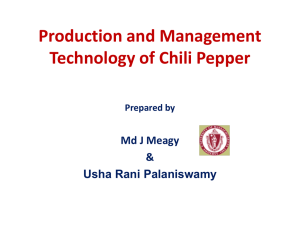 Production and Management Technology of Chili Pepper Prepared