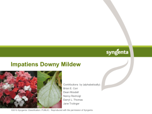 Impatiens Downy Mildew - Walnut Springs Nursery, Inc.