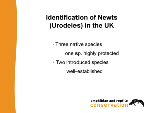 Identification of Newts