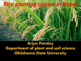 Rice planting system in Nepal - Precision Agriculture, SOIL4213