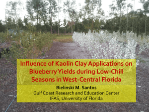 Influence of Kaolin Clay Applications on Blueberry Yields during