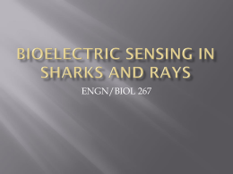 Shark Electrosense: physiology and circuit model []