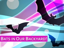 Bats in Our Backyard! PowerPoint