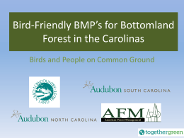 Bird-Friendly BMP`s for BottomlandForest in the