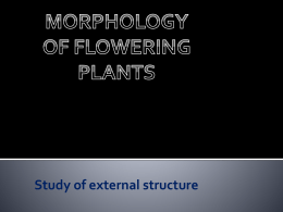 Morphology of flowering plants