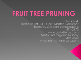 FRUIT-TREE-PRUNING - North End Organic Nursery