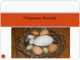 Oviparous Animals & Their Eggs