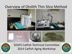 Overview of Otolith Thin Slice Method