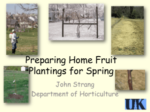 Preparing Home Fruit Planting for Spring