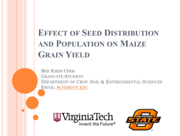 Effect of Seed Distribution and Population on Maize Grain Yield