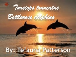 Dolphins - UpWardBoundSummerScience